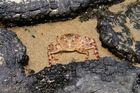 Tot einer Krabbe