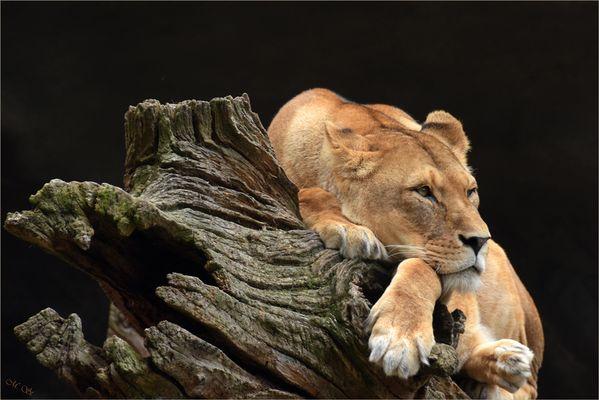 Total entspannt