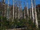 Tote Bäume...