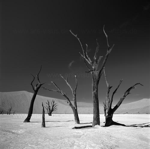 Tote Bäume im Sossusvlei / Namibia