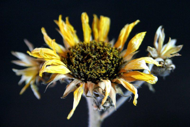 Tote Blume 2