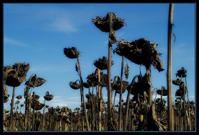 Tote Blumen