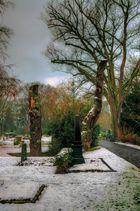 tote Friedhofsbäume