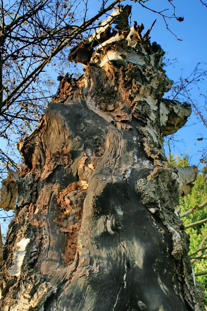Toter Baum 3