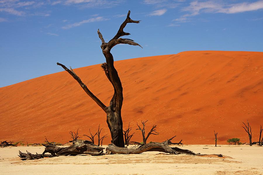 Toter Baum Dead Vlei im Sossusvlei Namibia 21.10.2009