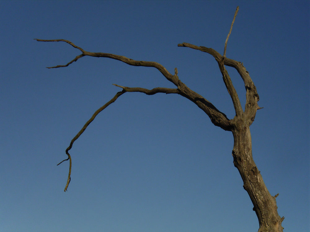 Toter Baum