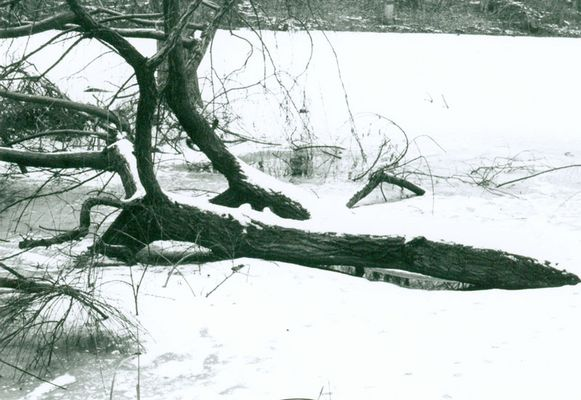 toter Baum im gefrorenem See