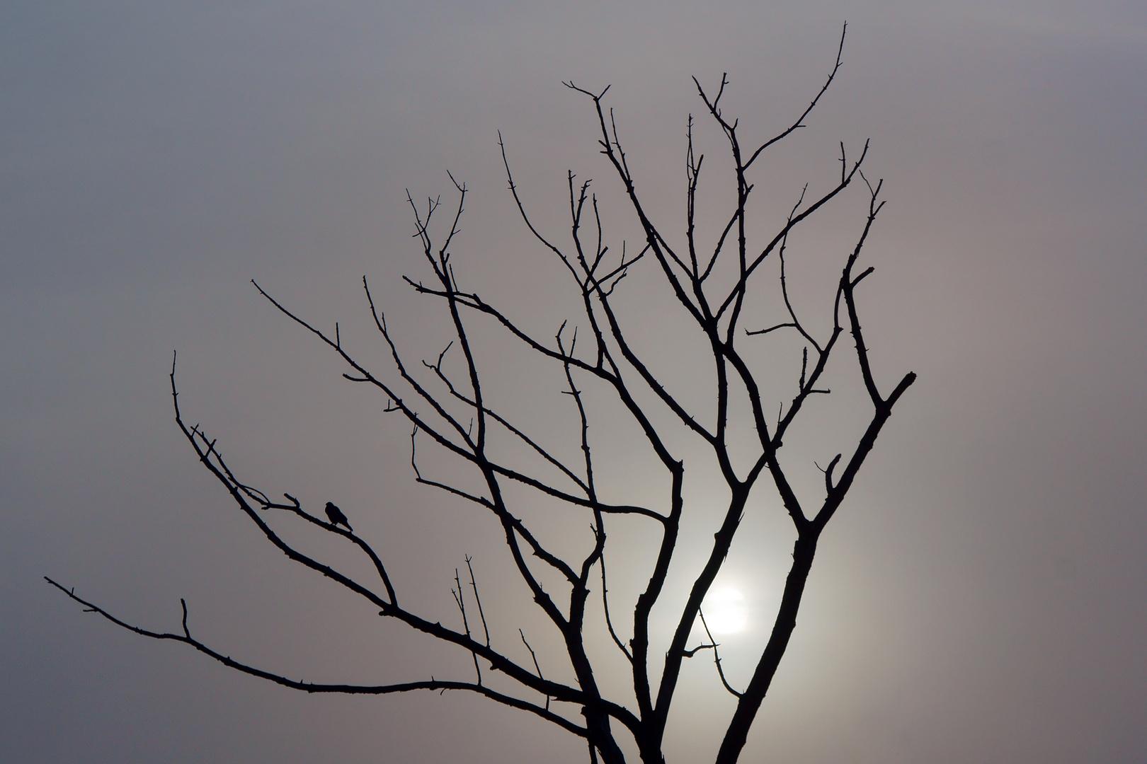 Toter Baum im Nebel