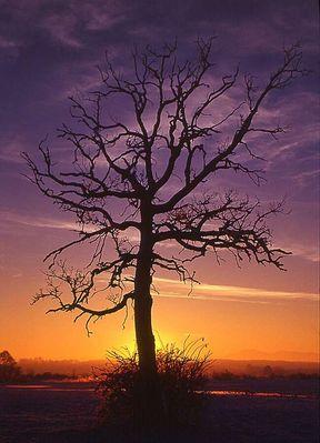 Toter Baum im Sonnenaufgang