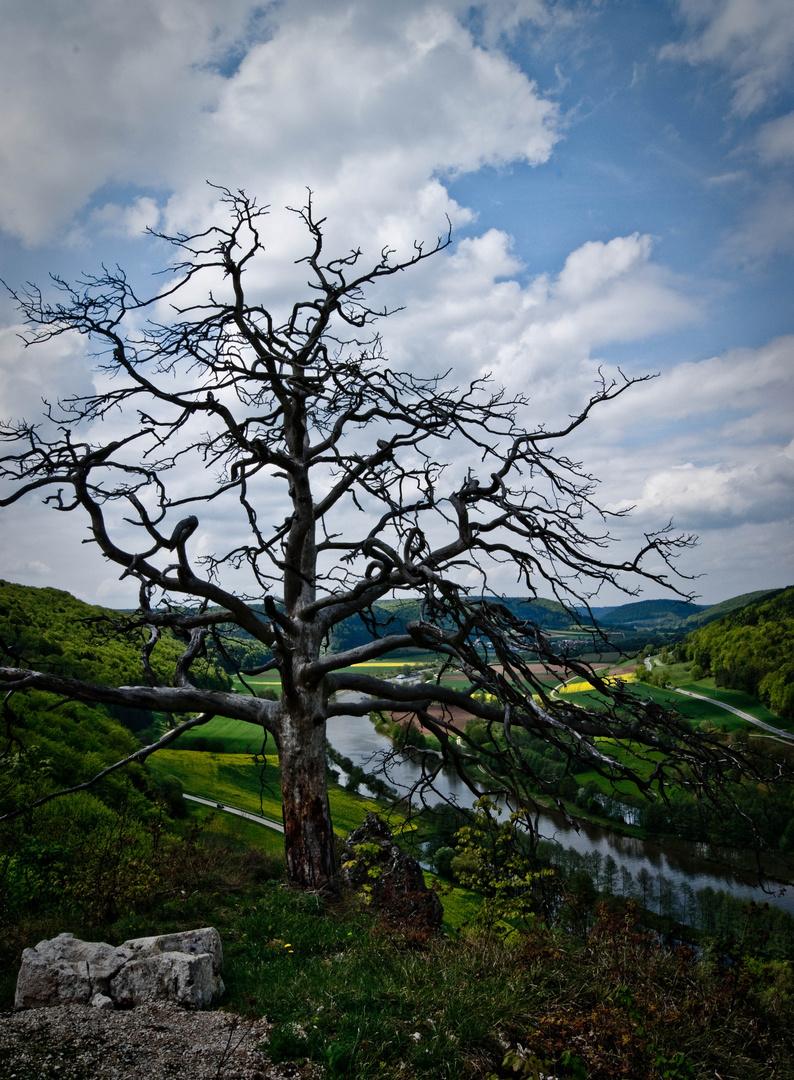 Toter Baum mit Blick auf den Main-Donau Kanal