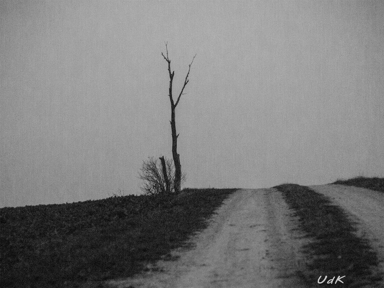Toter Baum spät am Tag