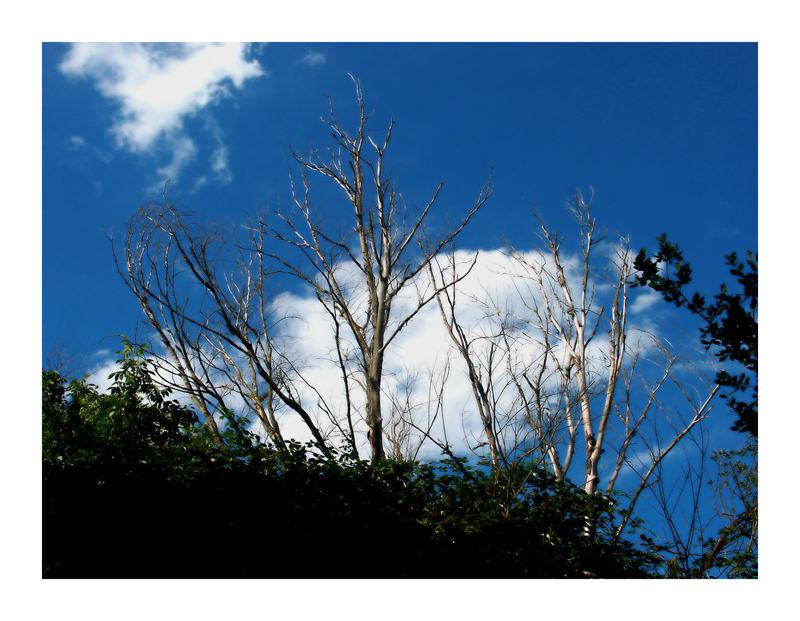Toter Baum_im August 2005