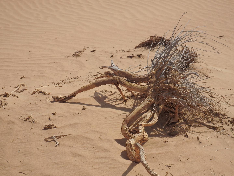 Toter Vogel in der Wüste?