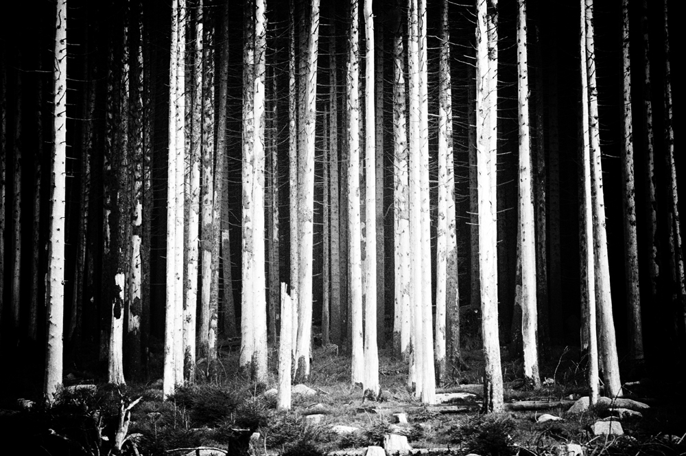 Toter Wald
