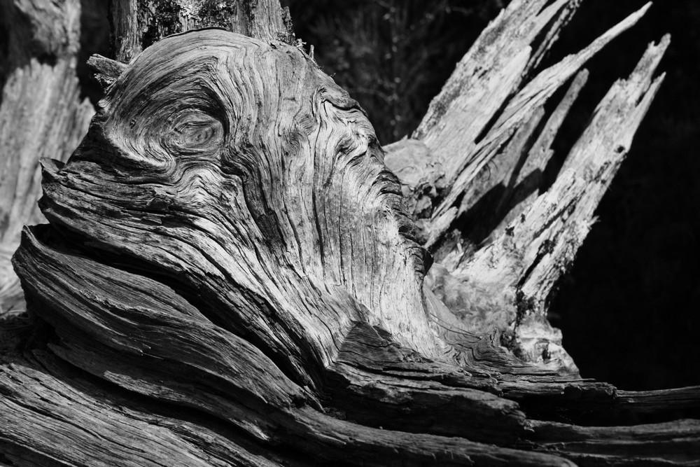 Totes Holz
