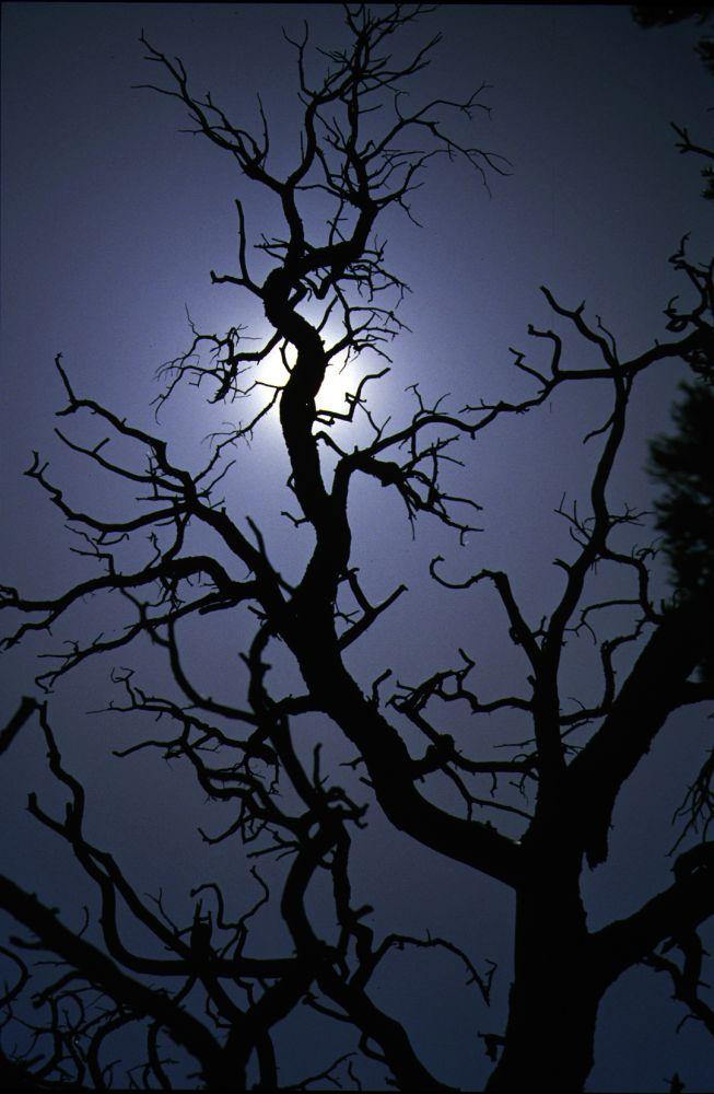 Totes Holz im Gegenlicht