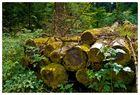 Totes Holz, lebendiger Wald