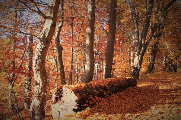 -Totholz im Herbstwald -