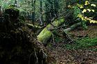 Totholz im Saarbrücker Urwald