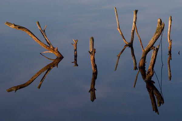 Totholz-Spiegelung im Moor