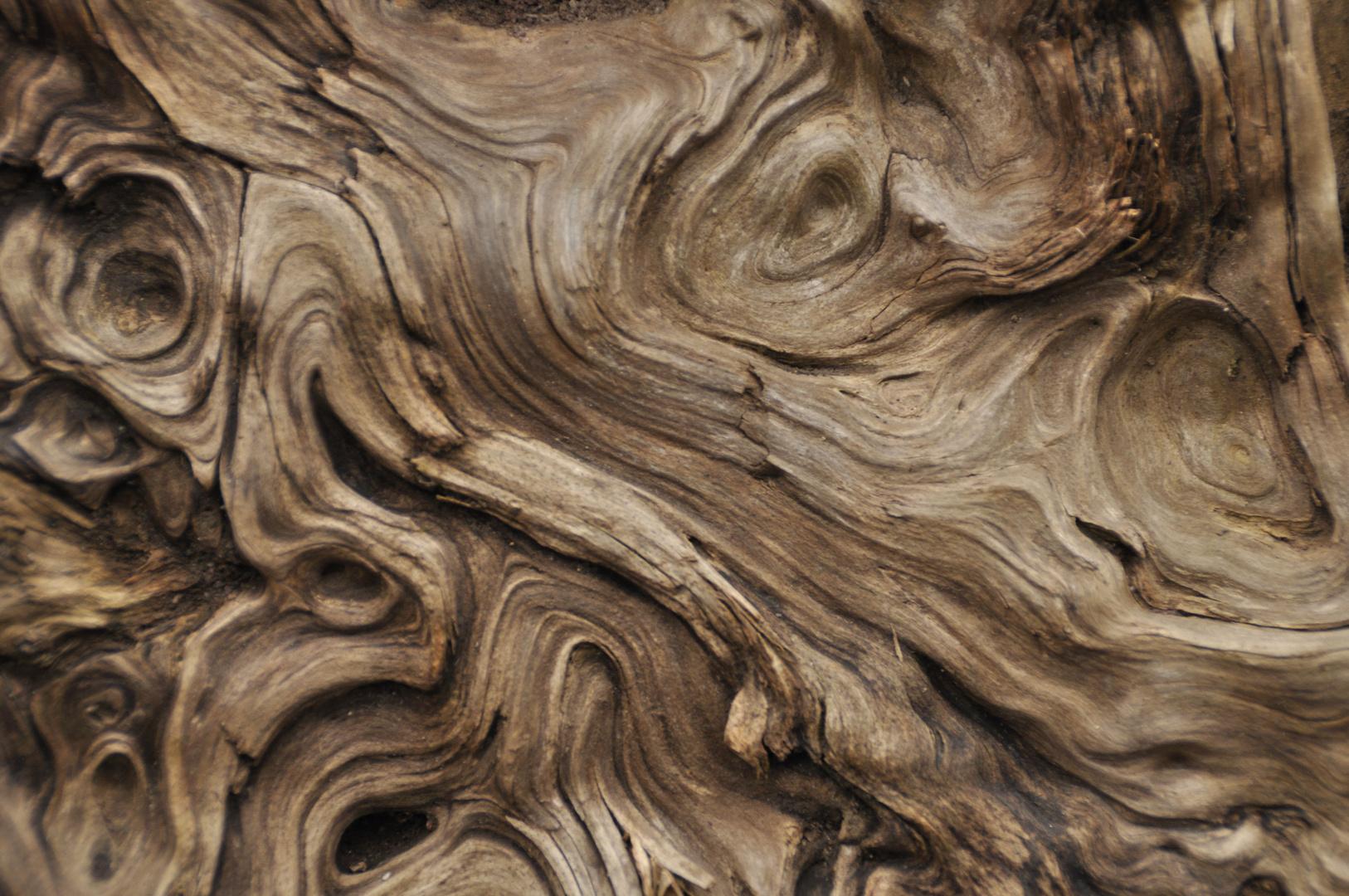 Totholz und seine Formen 01