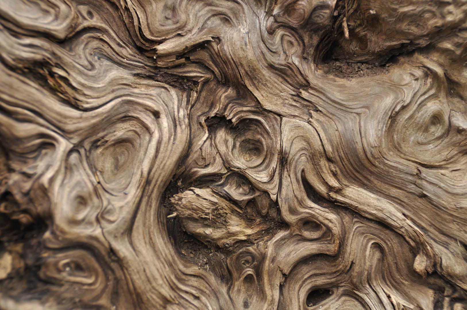 Totholz und seine Formen 02
