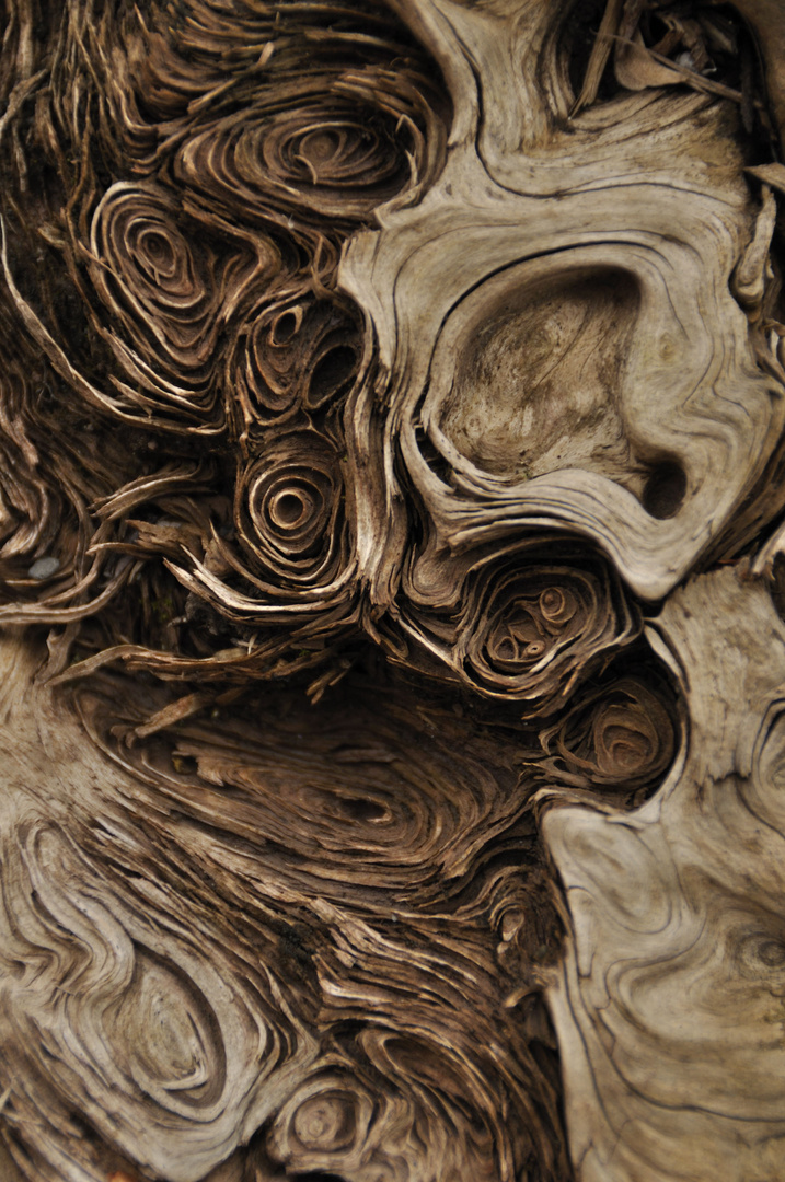 Totholz und seine Formen 03