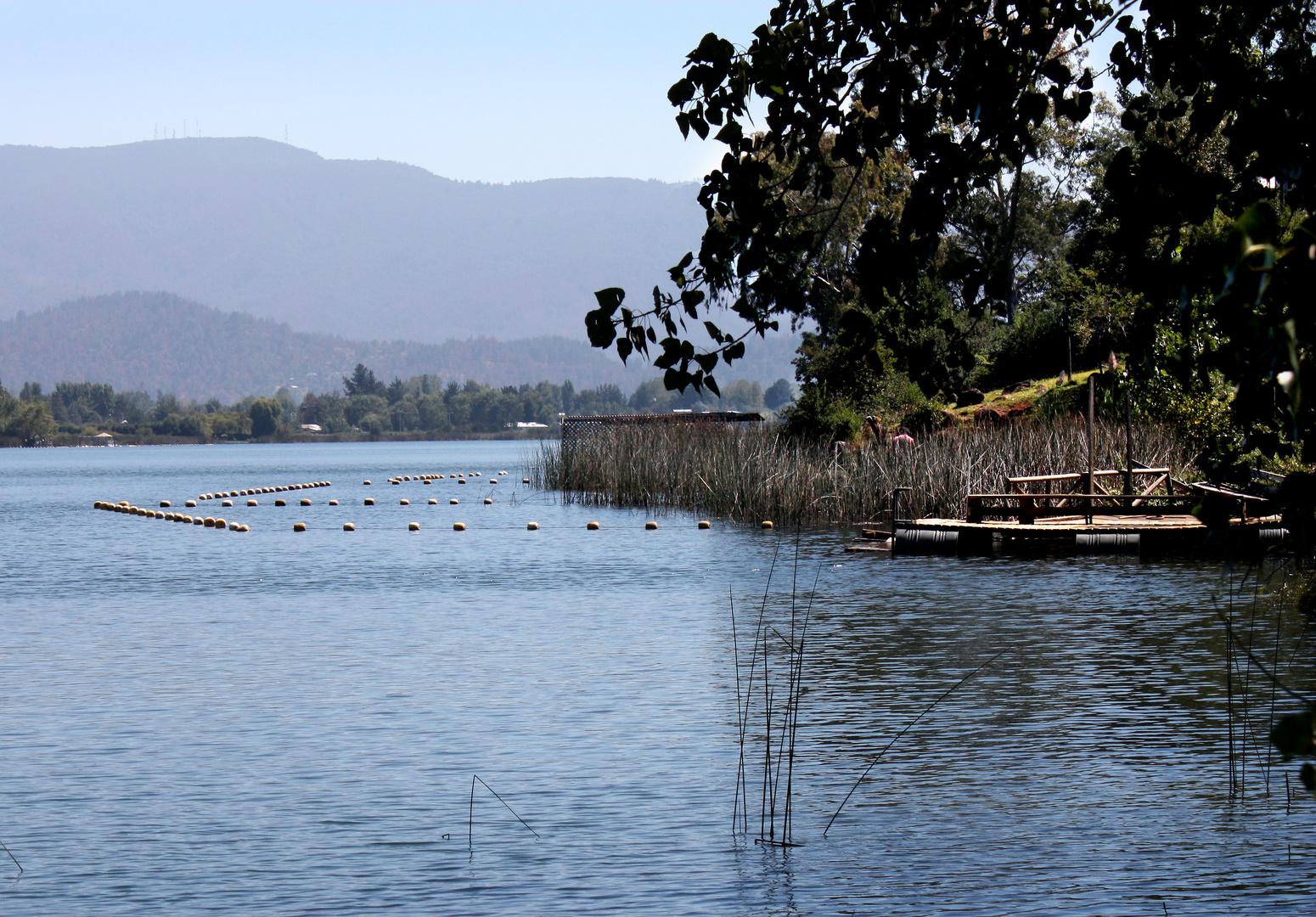 Totoral en Laguna Avendaño