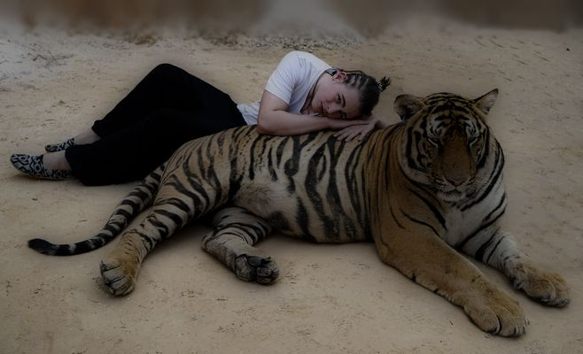 Touch the Tiger