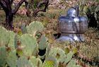 touchdown in the cactus garden