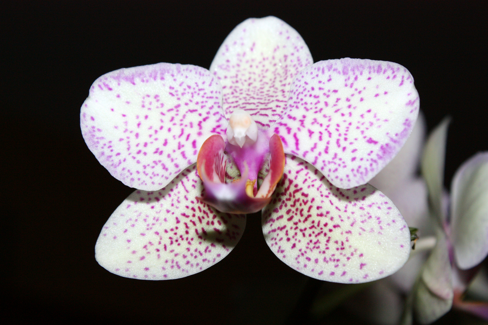 toujours cette fleure