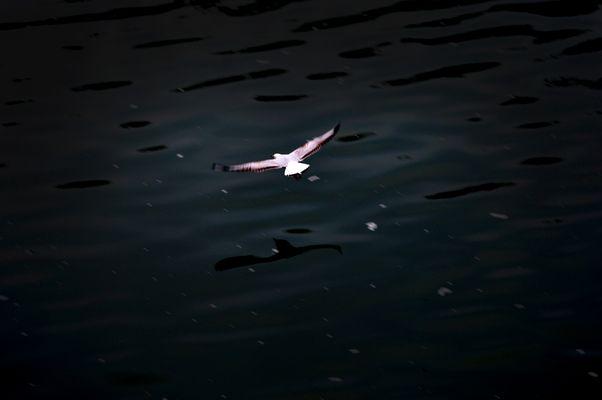 Toulousian Flight