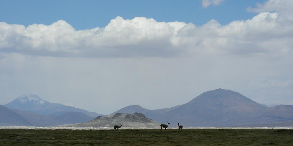 Tour Arica to Iquique