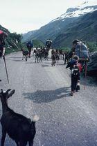 Tour du Mont Blanc 1980 (1)
