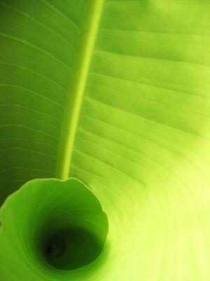 tourbillon vert