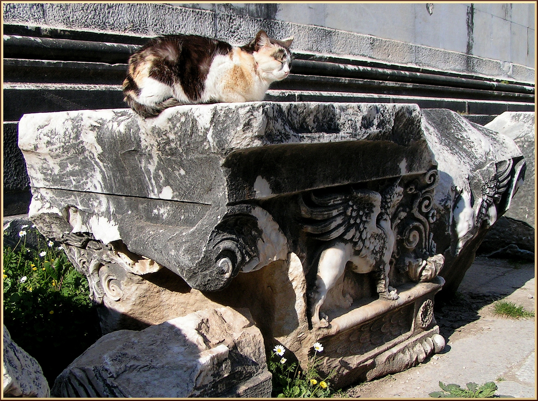 Touri-Katze und Fabelwesen