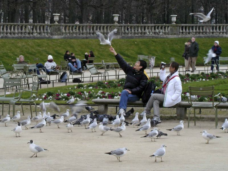 Touristes et oiseaux au Jardin du Luxembourg