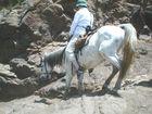 touristin auf Basotho Ponie