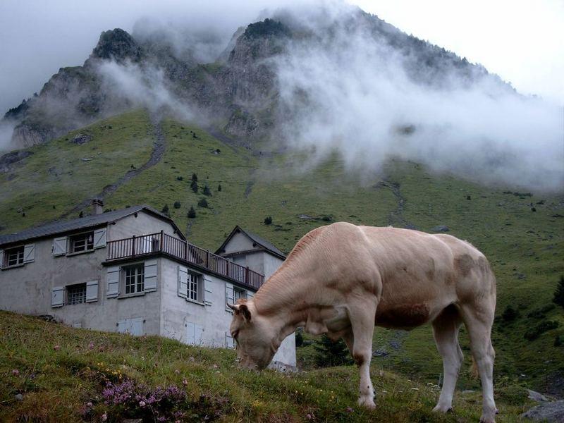 Tourmalet, Kuh und Haus