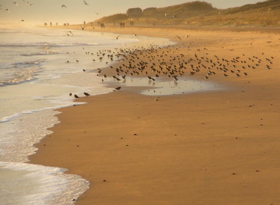 tous à la plage