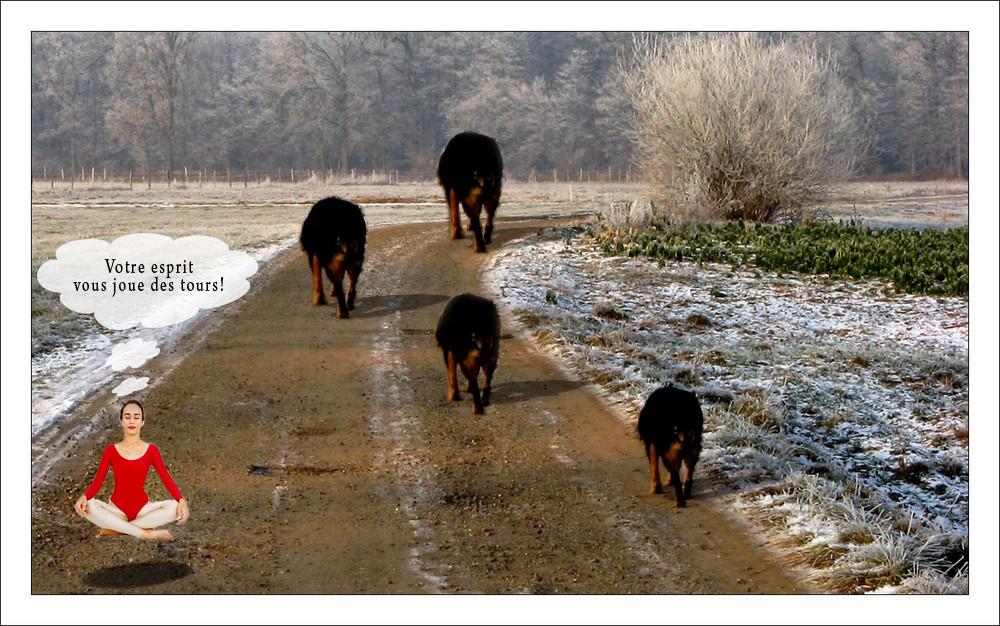 Tous les chiens ont la même taille !!!
