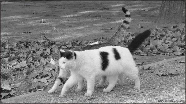 Tout lemonde veut devenir un cat (8)