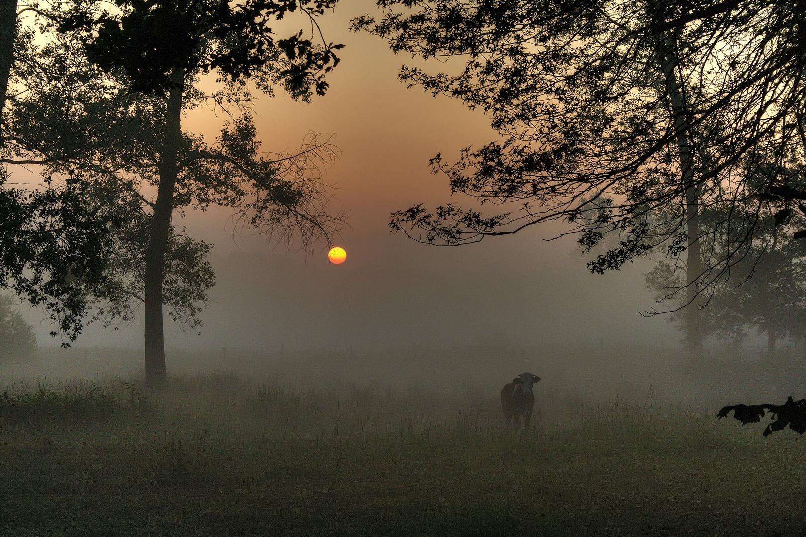 Tout seul dans la brume