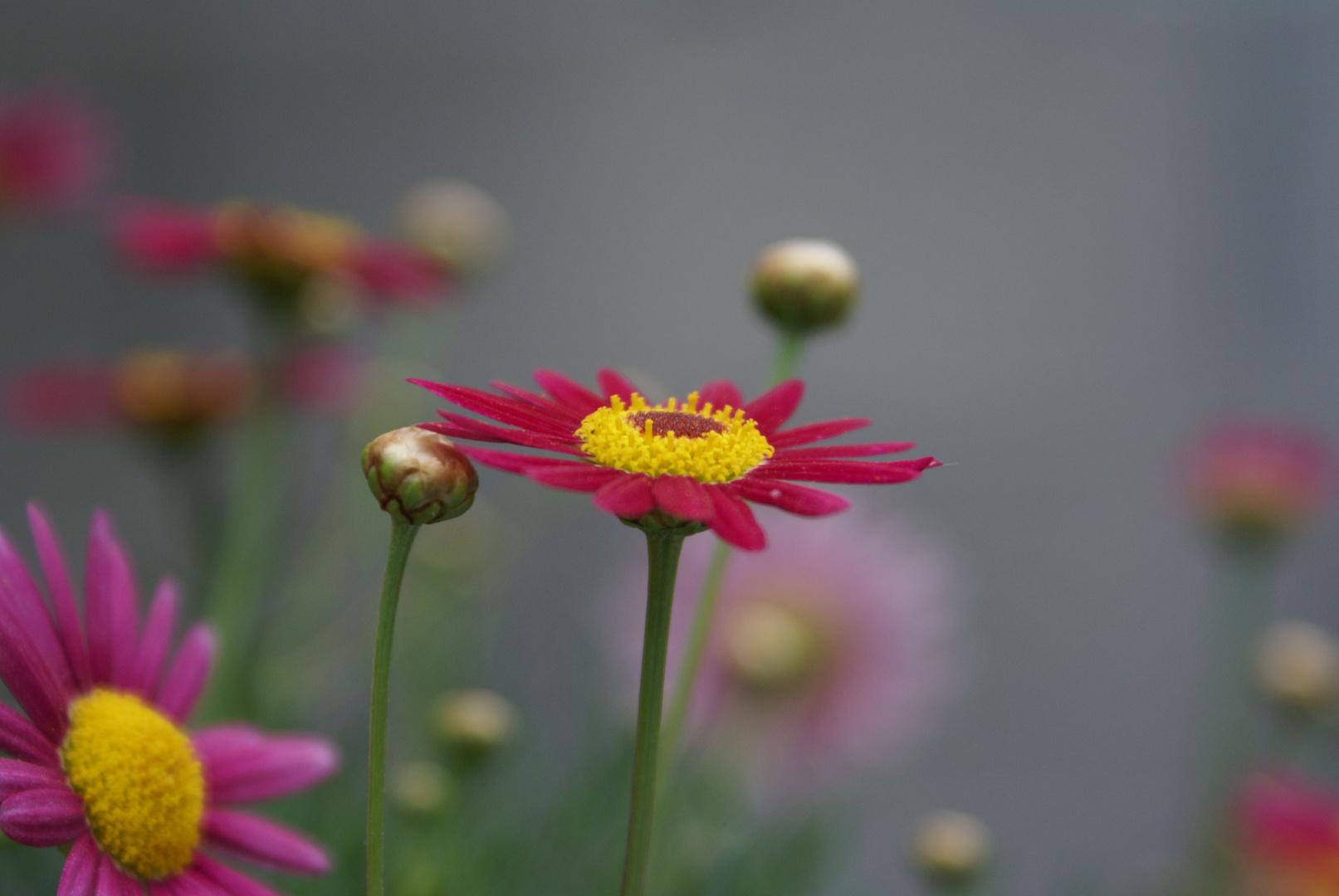Toutes les fleurs sont un langage