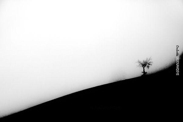 Tra il chiaro e lo scuro