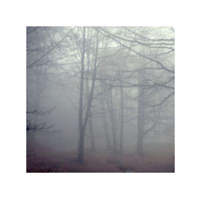 Tra le brume del Casentino