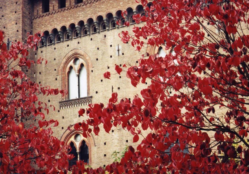tra le foglie. . . .