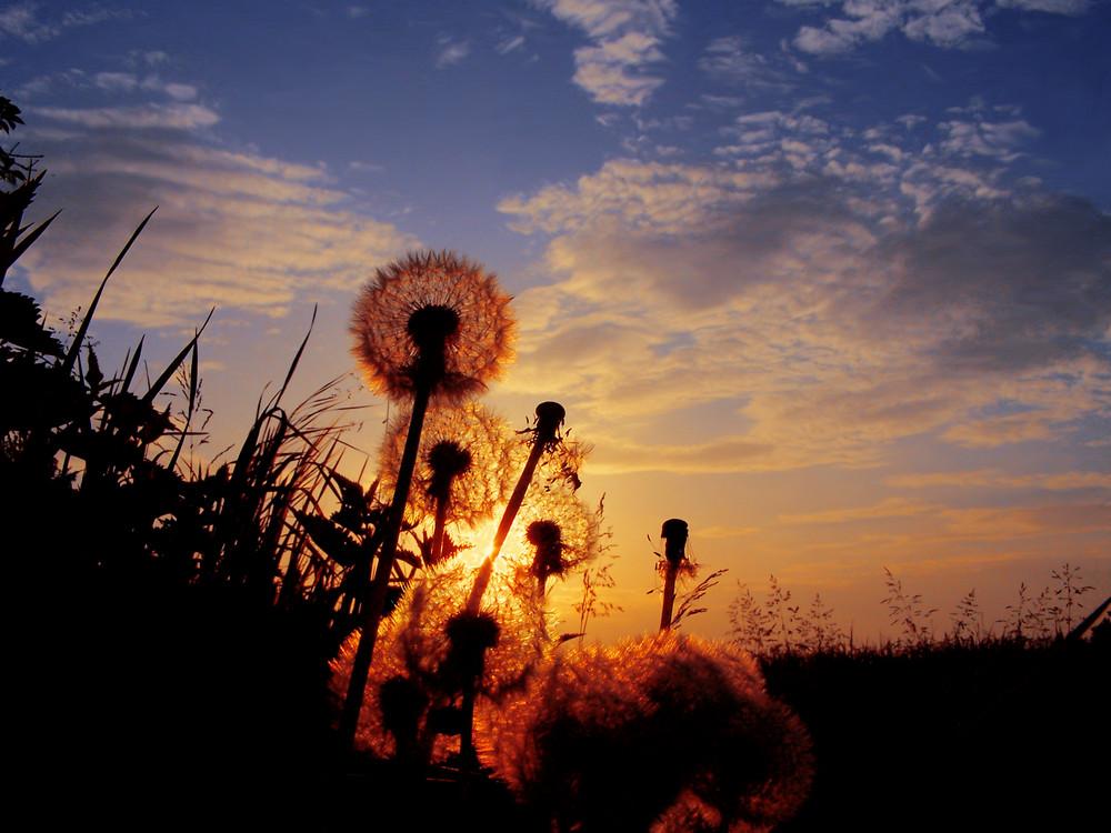 ...tra me e il sole...