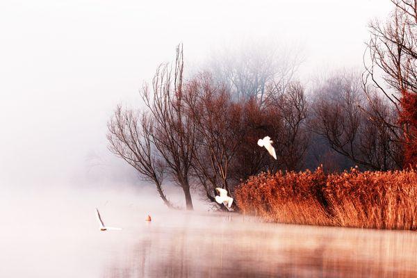 tra nebbia e gabbiani