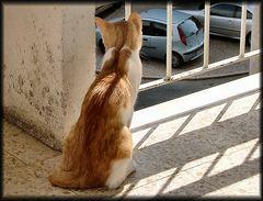 ..tra poco scappomi via...vado cercare il gatto nero...